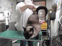 猫 ミニ美容 爪切り チャムちゃん&チョコ君