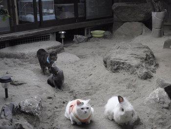 猫カフェ みーこ うさぎ&ハリネズミ