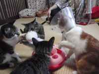 猫カフェ みーこ うさぎ&ハリネズミもいるよ