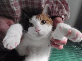 猫ホテル 三毛猫 杏ちゃん