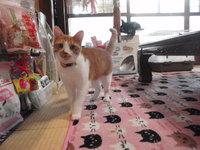 猫カフェみーこ はちちゃん&きなこちゃん