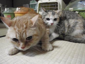 猫カフェ 爪切り かっちゃん家族