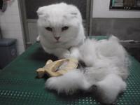 猫 ミニ美容 猫爪切り