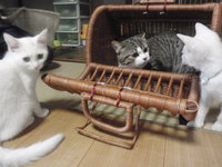 猫 カフェ みーこ ムー君