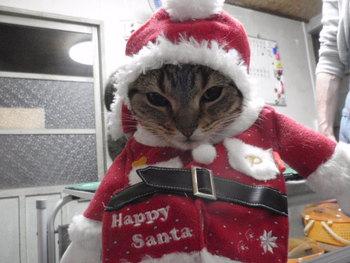 猫美容 ネイルキャップ みぃちゃん家族