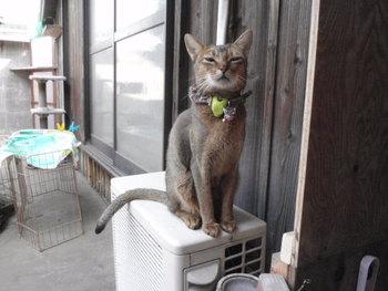 猫 cafeみーこ