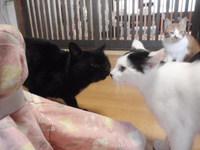 猫カフェ みーこ