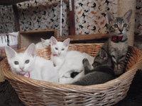 猫 里親募集 決まり 4兄弟