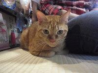 猫カフェ みーこ ムギ君