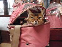 猫 キャリーバッグ 丸型 お年玉セール