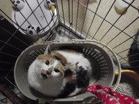 猫 ホテル みーちゃん 三毛猫