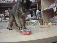 猫おやつ 新鮮マグロ