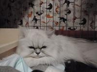 猫 ホテル みかんちゃん チンチラ