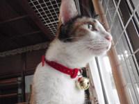 猫 タマの首輪 みけちゃんお気に入り
