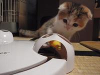猫 電動おもちゃ パウンズ