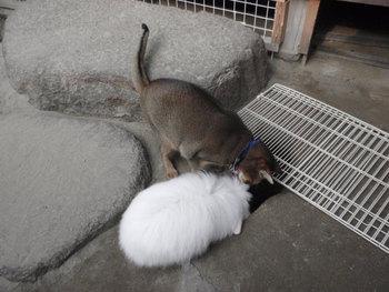 猫カフェみーこ 大ちゃん