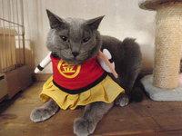 猫 金太郎さん