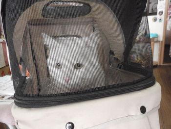 猫一時預かり 金太郎君