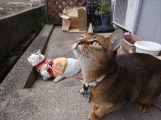 猫 みーこ 移転 最終日