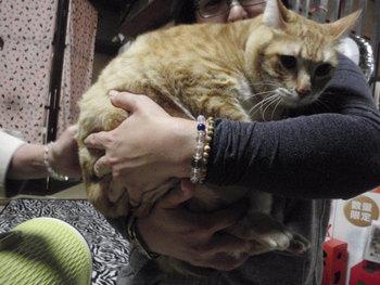 猫 みーこイベント アニマルコミュニケーション 葱先生