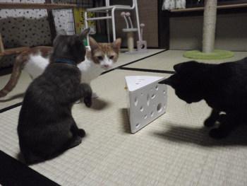 猫 チーズ 3個
