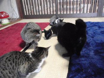 猫 里親探し 6匹