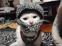 猫 ちこちゃん おめでとう マンチカン