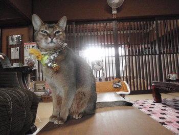猫 アニマルコミュニケーション 4