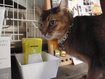 猫 健康に秘訣 水