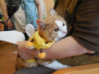 猫 うさぎ 音楽 施設訪問