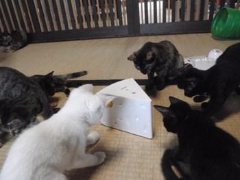 猫 里親募集 13匹