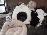 猫 雑貨 園田くん