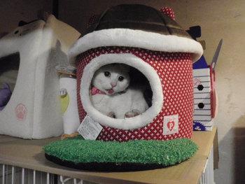 猫 ハウス ベッド 猫型