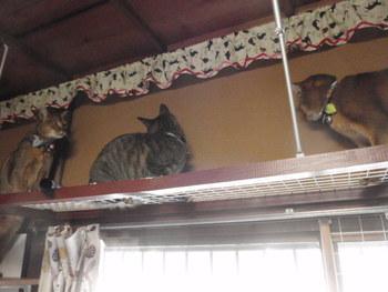 猫 カフェ みーこ きら