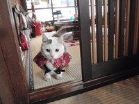 猫 みーこイベント 猫好きパーティー
