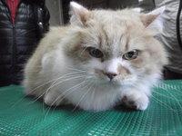 猫 爪切り ミニ美容 チャッピー君・茂吉君
