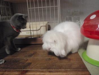 うさぎ 猫 カフェ うた&猫たち