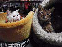 猫 好きパーティー 猫の日イベント