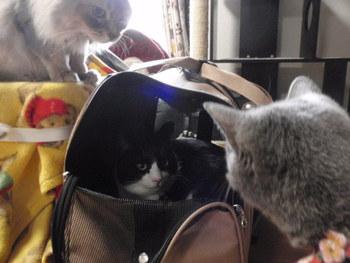 猫 好きパーティー みーこイベント