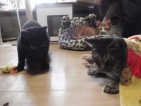 猫 カフェみーこ 三家族集合