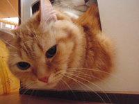 猫 爪切り&猫カフェ ミーちゃん家族