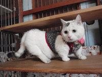 猫 施設訪問 ひだまり♡ねこ みーこ隊