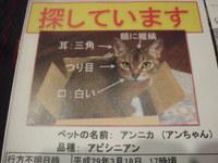 猫 迷子探し アビシニアン
