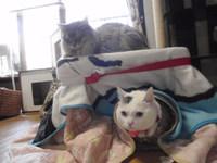 猫 みーこ 明日は「ねこのわ」