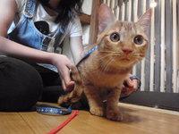 猫 カフェ みーこ ムギ君 レオ君