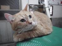 猫 美容 ミミちゃん