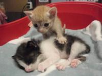 猫 リンゴちゃん&ライムちゃん