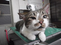 猫 シャンプー マロン君