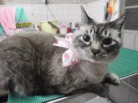 猫 美容 きのちゃん