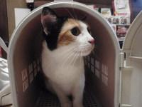 猫 カフェ みーこ チビちゃん